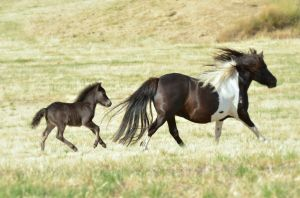 Flair & Filly Foal P 2014_v2